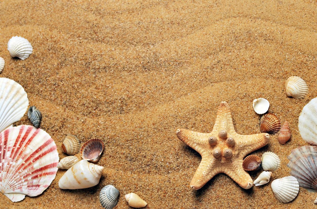 Arena y conchas de mar